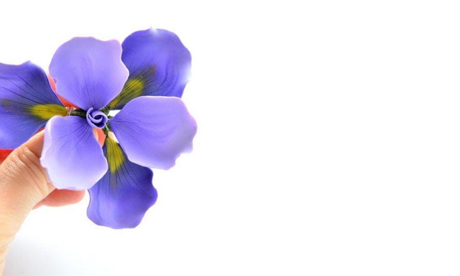 Irisul Brosa Supradimenstionata