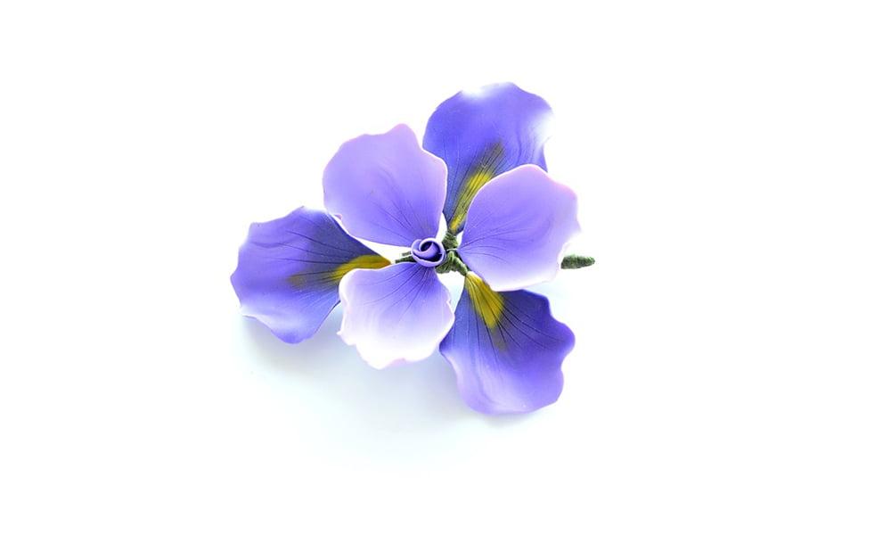 Irisul Brosa Supradimensionata